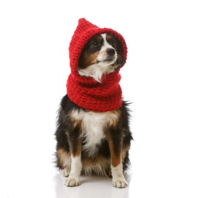 Red Riding Hood Dog
