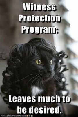 Cat in Wig