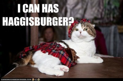Scottish Kitty 1